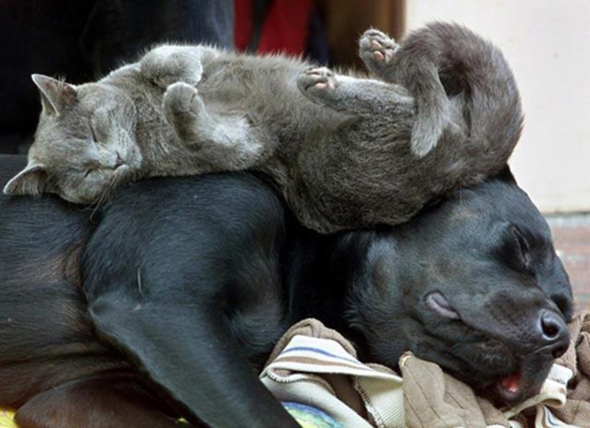 sleeping dog pillow 4