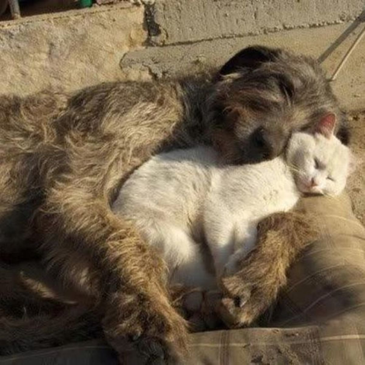sleeping dog pillow 5.1