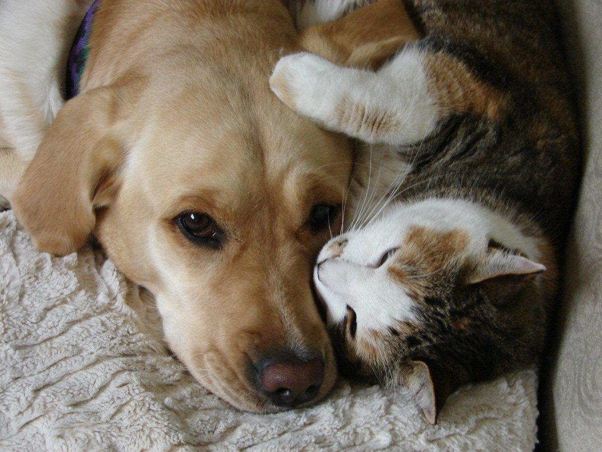 sleeping dog pillow 6.1