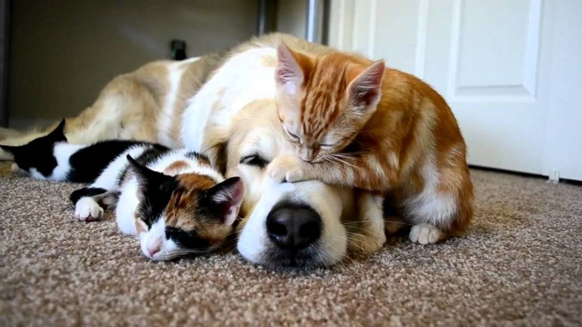 sleeping dog pillow 9