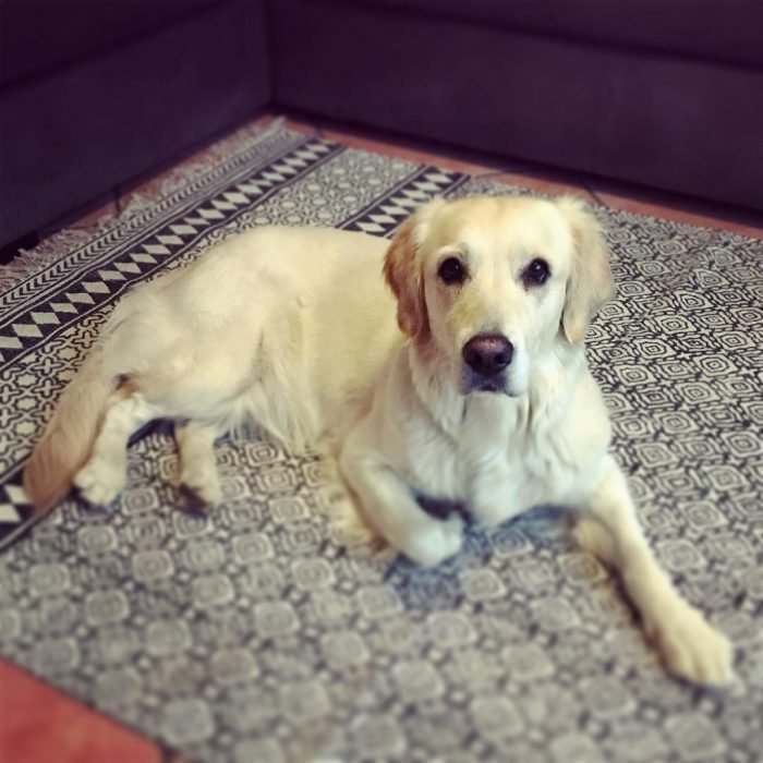 perrito en una alfombra