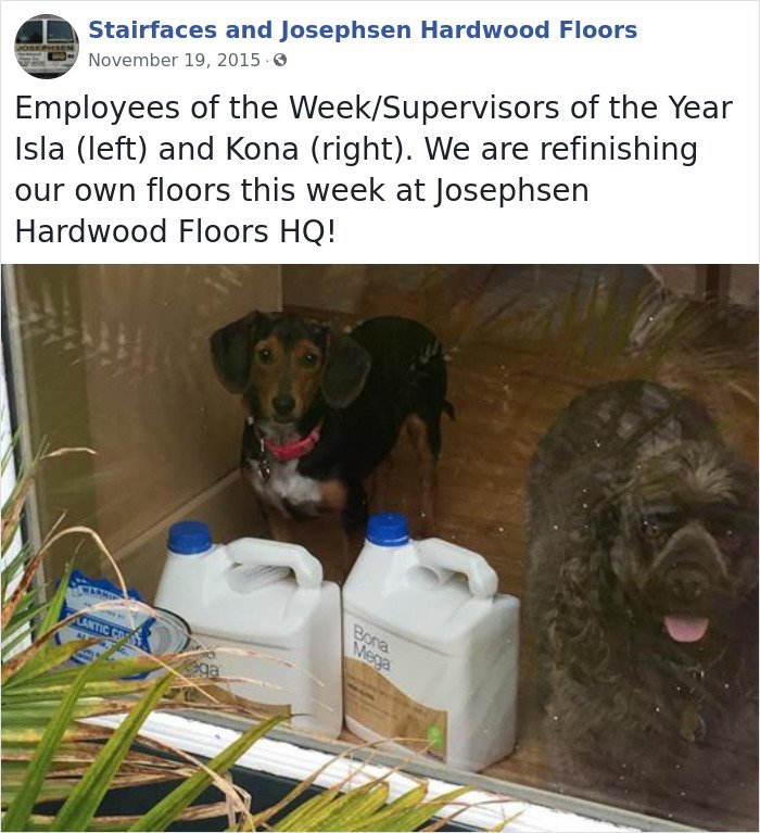 Dogs-Employees-Of-The-Week-Josephsen-Hardwood-Floor
