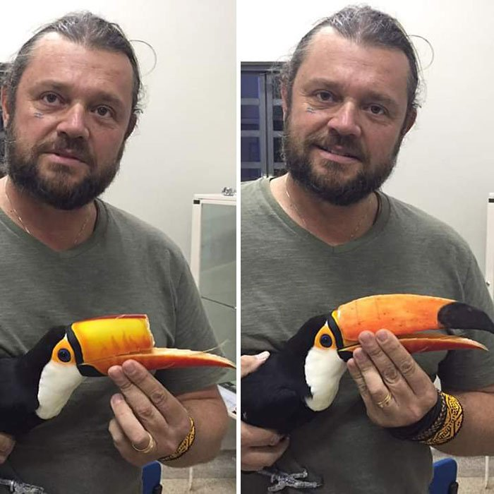 Toucan With A Reconstructed Beak Done Throughout 3D Printing