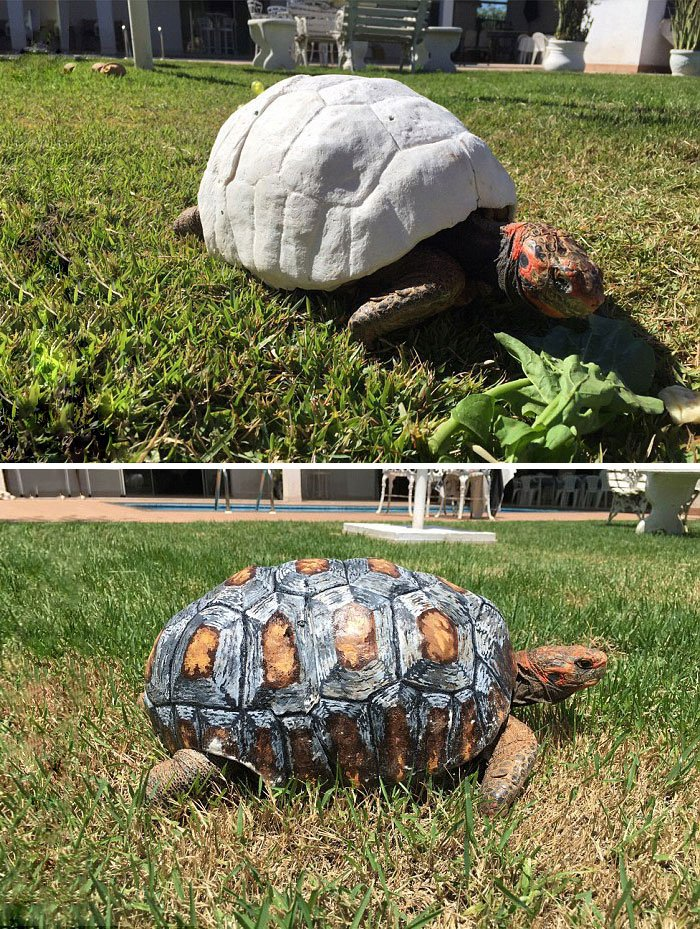 3D Printed Shell For An Injured Tortoise
