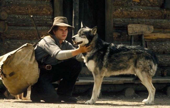 15Conmovedoras películas para aquellos que aman alos animales