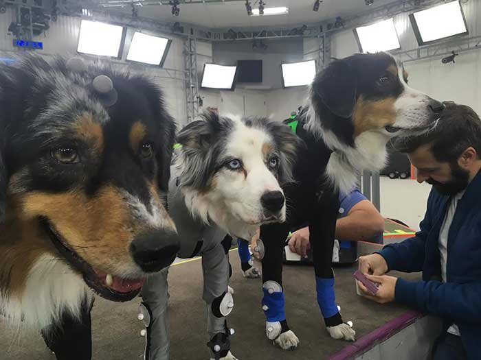 Dogs Working Hard And Going To Be Virtualized Forever In The Last Of Us 2