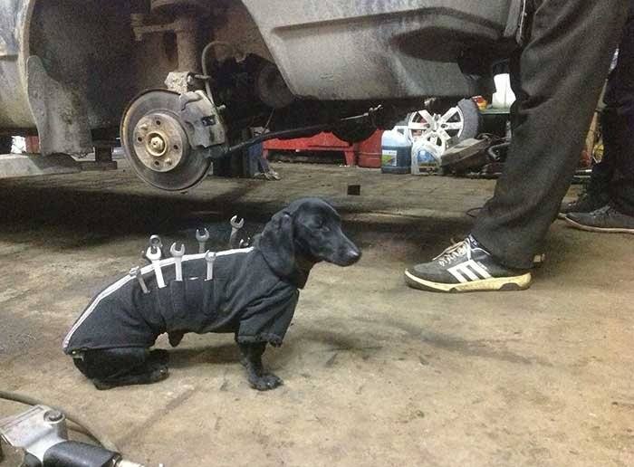 Dog Mechanic On The Job