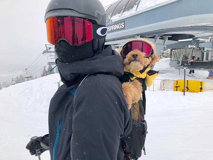 This Cute Pupper Helps People With Epileptic Seizures On A Skiing Resort