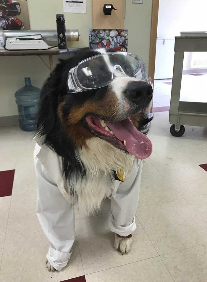 Our Bernese Mountain Dog Visits My High School Kids And Helps Them With Science