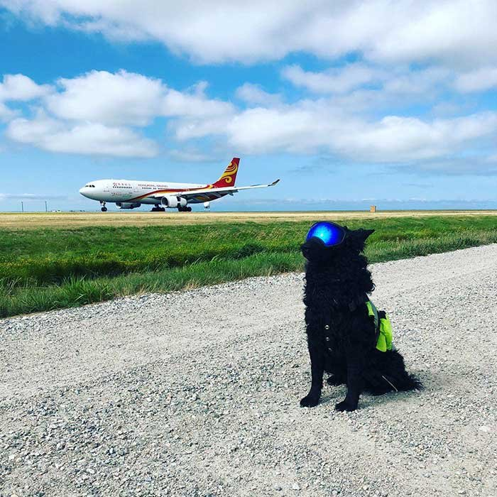 Pilot Scares Away All The Birds Who Might Otherwise Come In To Contact With Aircraft At Vancouver Airport