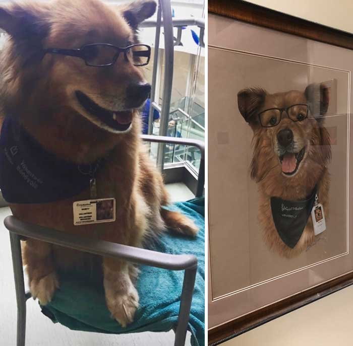 This Is Rusty. He Volunteers At My Local Hospital Cheering Up Patients. He Never Leaves Home Without His Glasses And Work Bandana