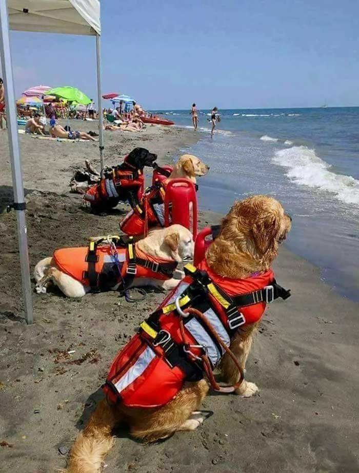 Lifeguard Doggos In Croatia