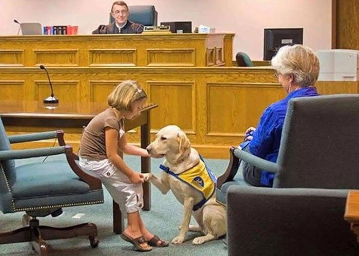 This Best Boy Helping Children Testify