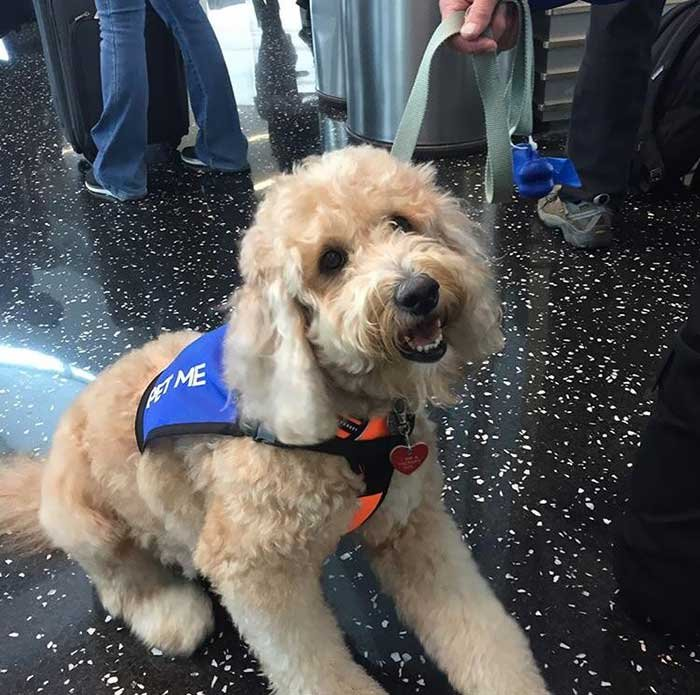 Met This Good Girl At The San Diego Airport. She's There To Brighten Your Day And Ease Your Travel Anxieties