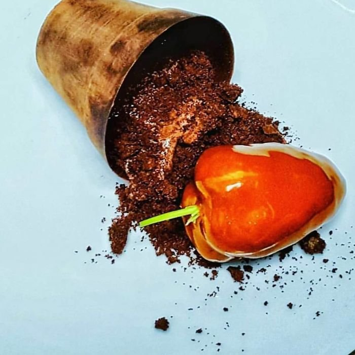 Scotch Bonnet Infused Brownie, Chocolate Mousse, Chocolate Plantpot