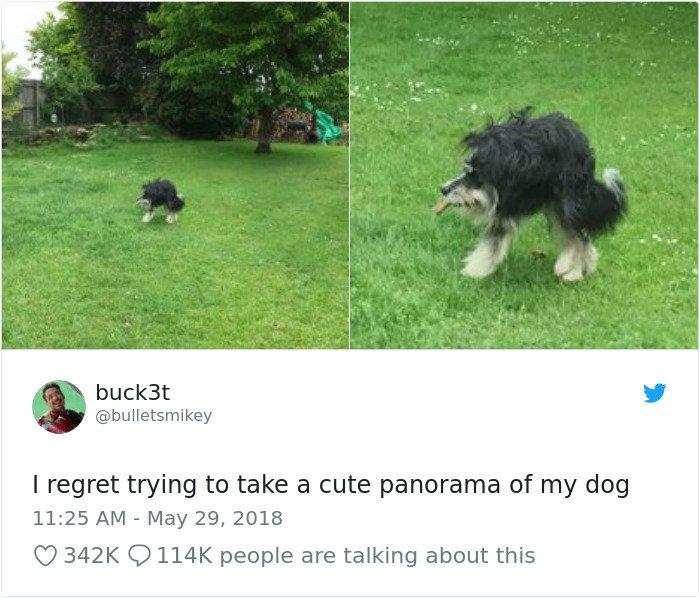 Panorama Of A Dog Goes Terribly Wrong