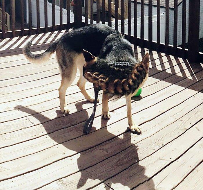Meet Milo, My 11-Headed Dog