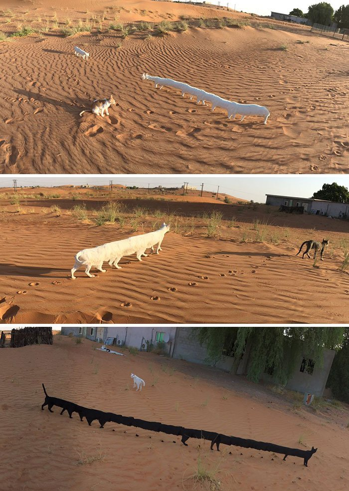 Cats Have Adapted To Living In The Desert