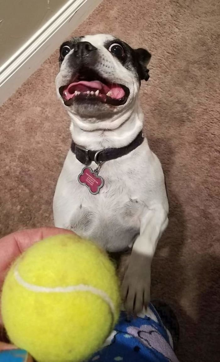 Munchie Wants Me To Throw The Ball, Now Damnit!