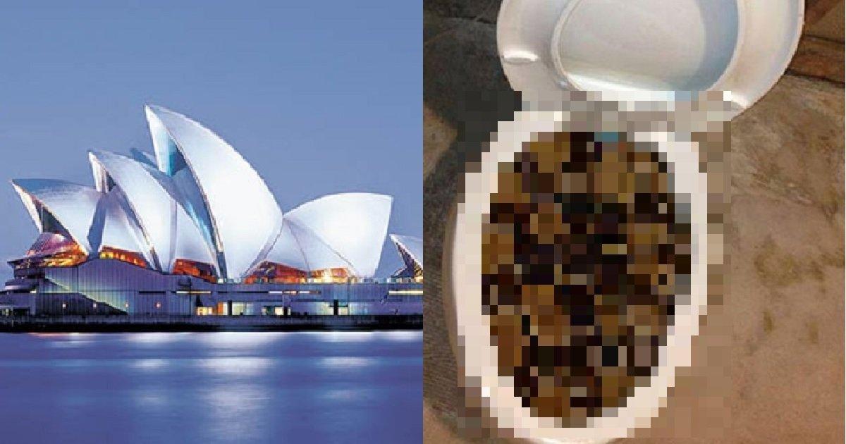 4 127.jpg?resize=412,232 - 뭐든지 거대하다.... '호주'에 살면 흔히 마주하는 것 TOP 5 (사진주의)
