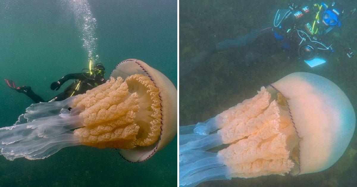 7 58.jpg?resize=412,232 - 스쿠버다이빙 하다 마주친 사람보다 큰 '괴물 OOO'의 정체 (영상)