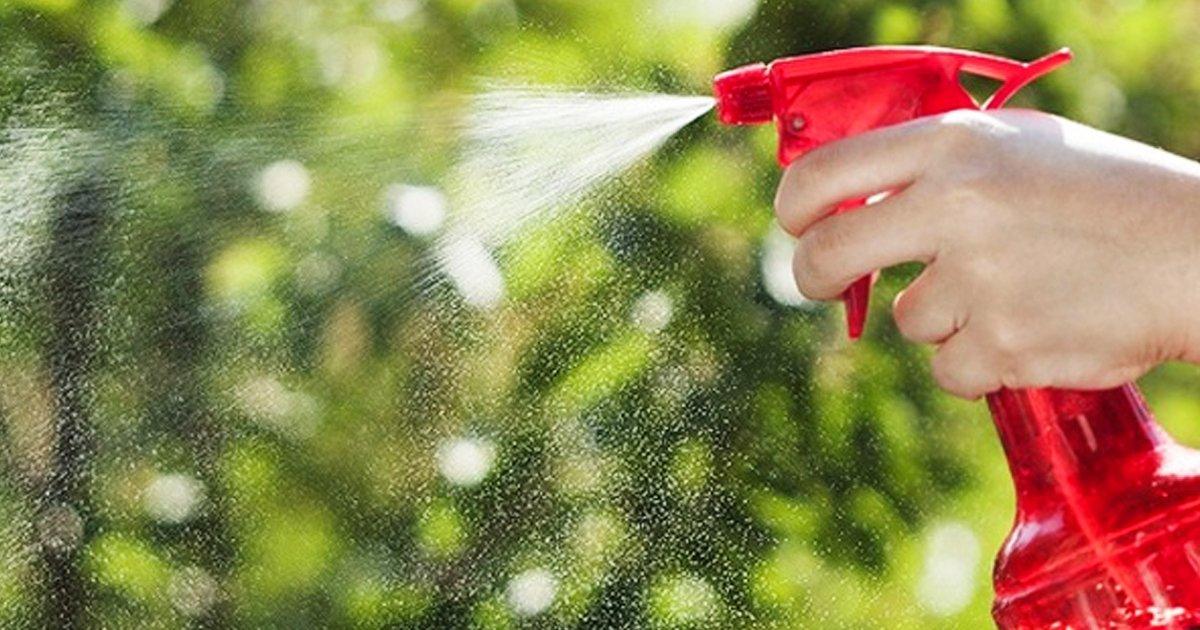 8 30.jpg?resize=1200,630 - 10 Maneras de evitar cualquier plaga o insecto en tu casa