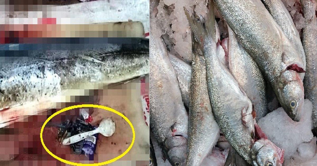 """88888 1.png?resize=300,169 - """"이게 어떻게?"""" 생선 배 속에서 발견된 '충격적인 정체물'"""