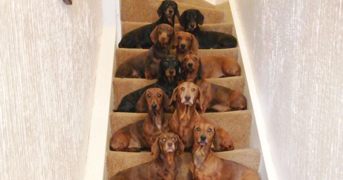 a 10.jpg?resize=412,232 - Teen Got A Breathtakingly Perfect Shot Of His 16 Dachshunds After A Friend Challenged Him To Do It