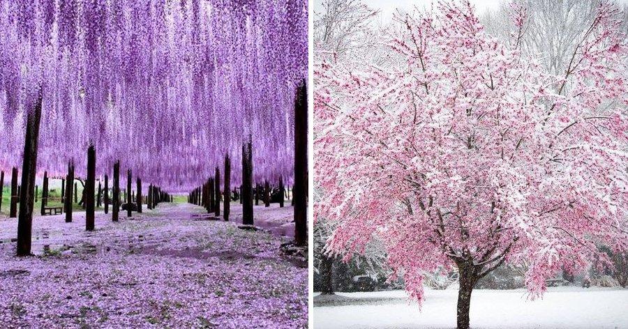 a1 9.jpg?resize=1200,630 - 12 imagens que explicam o real sentido da palavra 'perfeição'