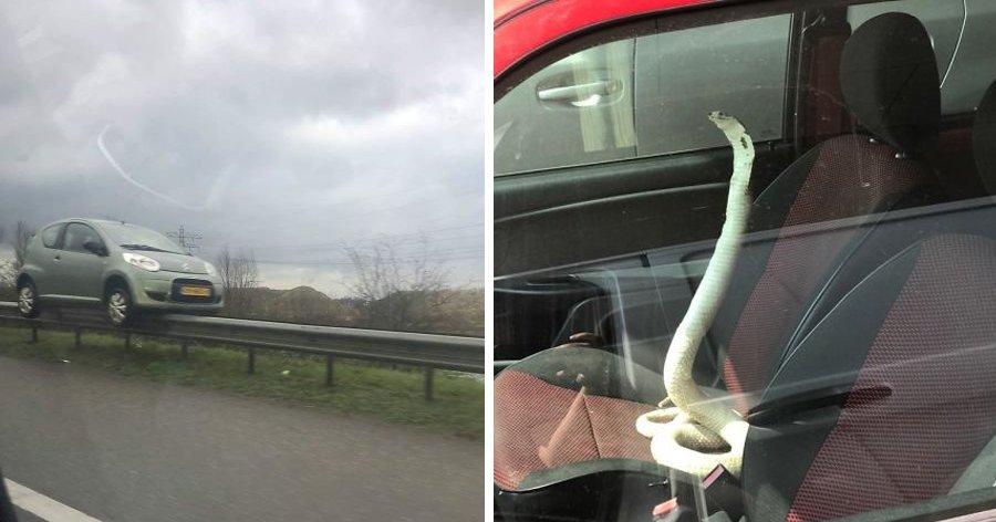 a9 5.jpg?resize=412,275 - 17 das coisas mais bizarras que as pessoas viram nas estradas