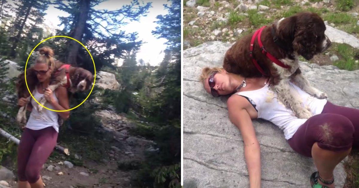 aaddda.jpg?resize=412,232 - Cette femme a porté un chien de 25 kilos sur ses épaules pendant 6 heures pour lui sauver la vie