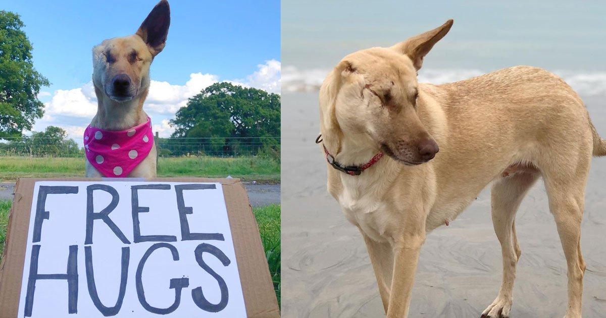 abandoned dog who was shot 17 times found a new home and works as a therapy dog.jpg?resize=412,232 - Cette chienne abandonnée qui a été frappée à 17 reprises a maintenant une vie normale