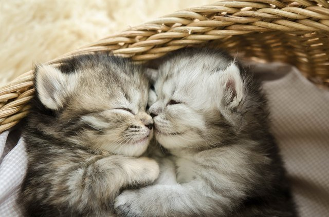 animal lovee.jpeg?resize=412,275 - 10+ Adorable Animals Who Show The True Meaning Of Love