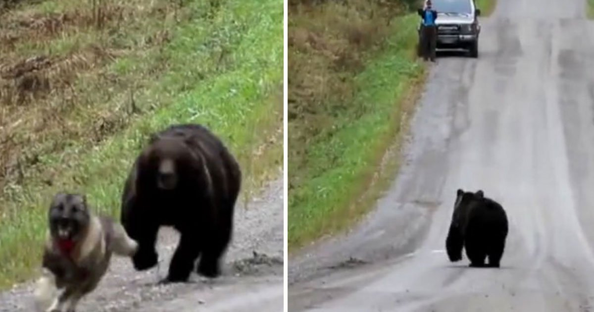 bear dog playing.jpg?resize=1200,630 - A Bear Was Playing With A Dog - A Group Started Filming And The Bear Didn't Like It
