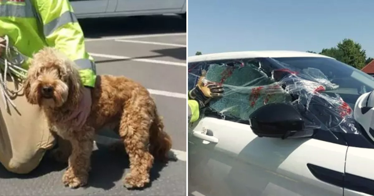 car3.png?resize=1200,630 - Dog Trapped In Boiling Hot Car With No Windows Open As Temperatures Increased During Heatwave
