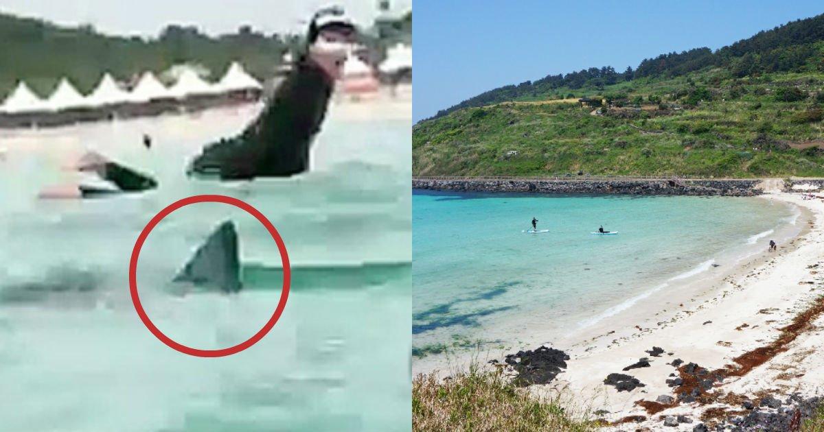 "ckeditor 6482803080023917337.jpg?resize=300,169 - ""현실판 죠스"" ... 제주도 해변에 '상어' 나타났다."