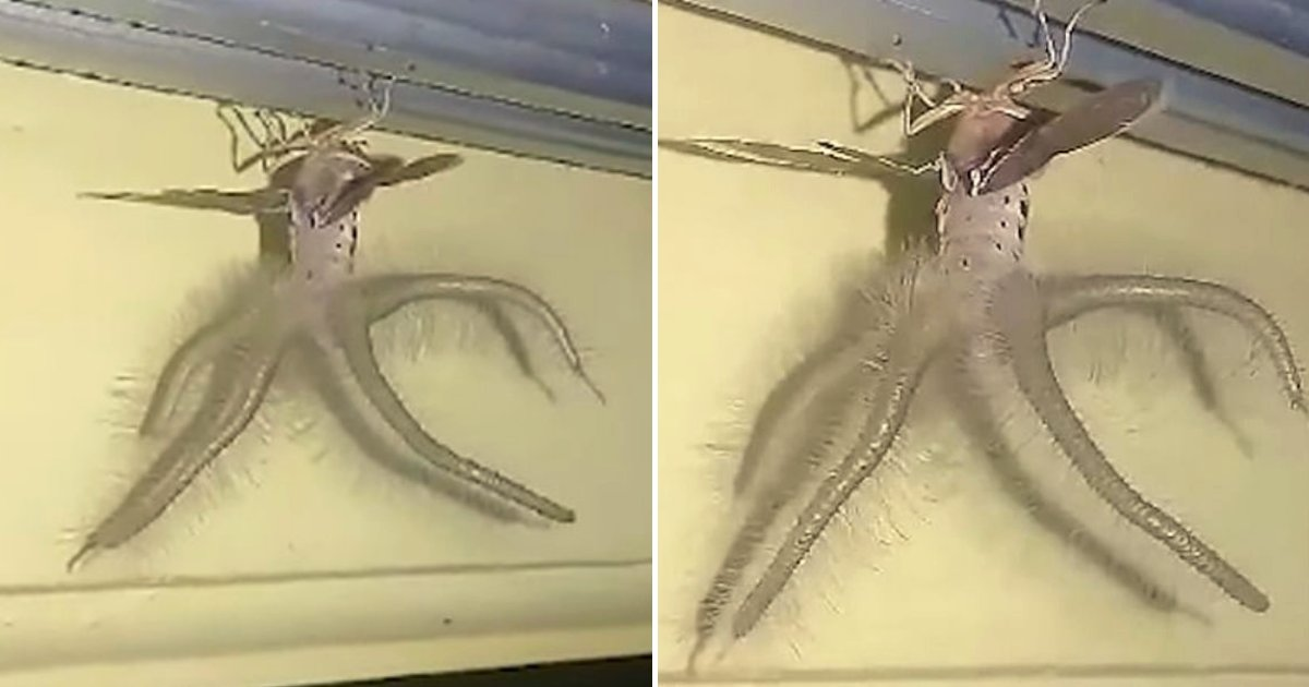creature4.png?resize=300,169 - Man Notices A Bizarre 'Alien-Like' Winged And Tentacled Creature Crawling Across His Ceiling