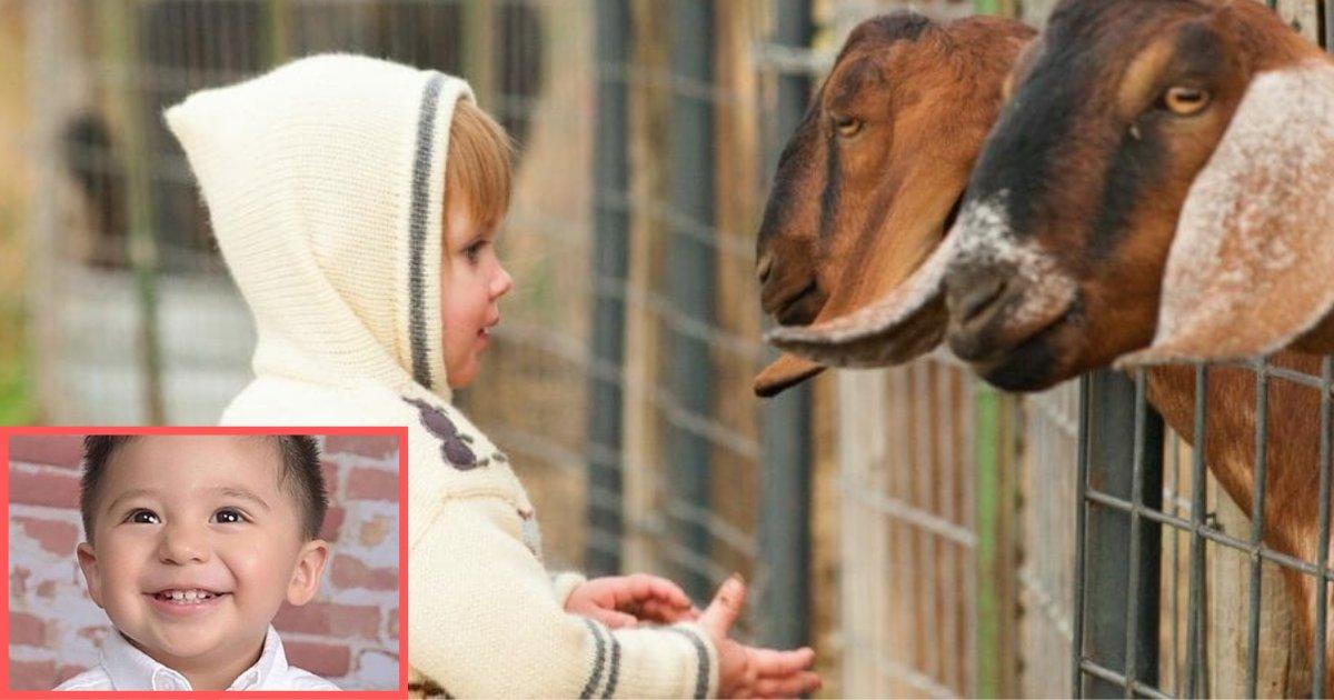d1 1.png?resize=1200,630 - Une excursion amusante au zoo pour enfants avec des parents s'est terminée par le décès d'un enfant de 2 ans