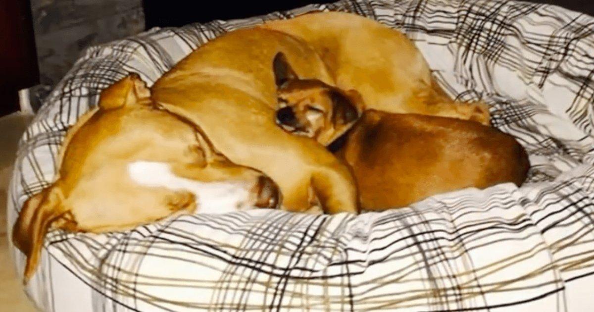 d1 19.png?resize=1200,630 - Un homme adopte deux chiens pour le prix d'un