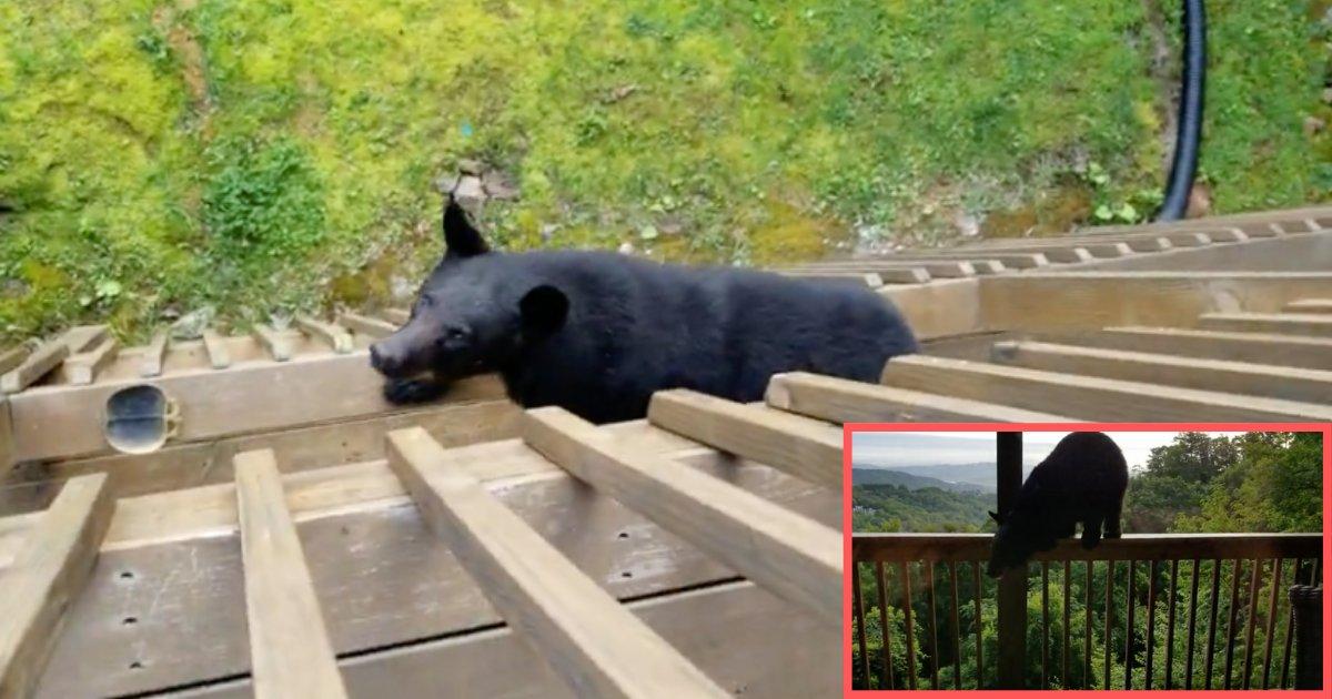 d2 14.png?resize=300,169 - Un ours grimpe sur le balcon pour saluer les résidents