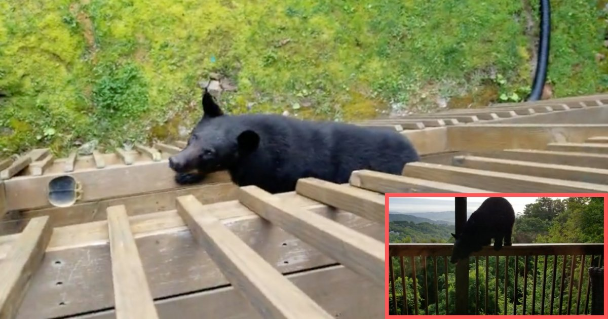 d2 14.png?resize=412,232 - A Bear Climbs Up The Balcony to Greet the Residents