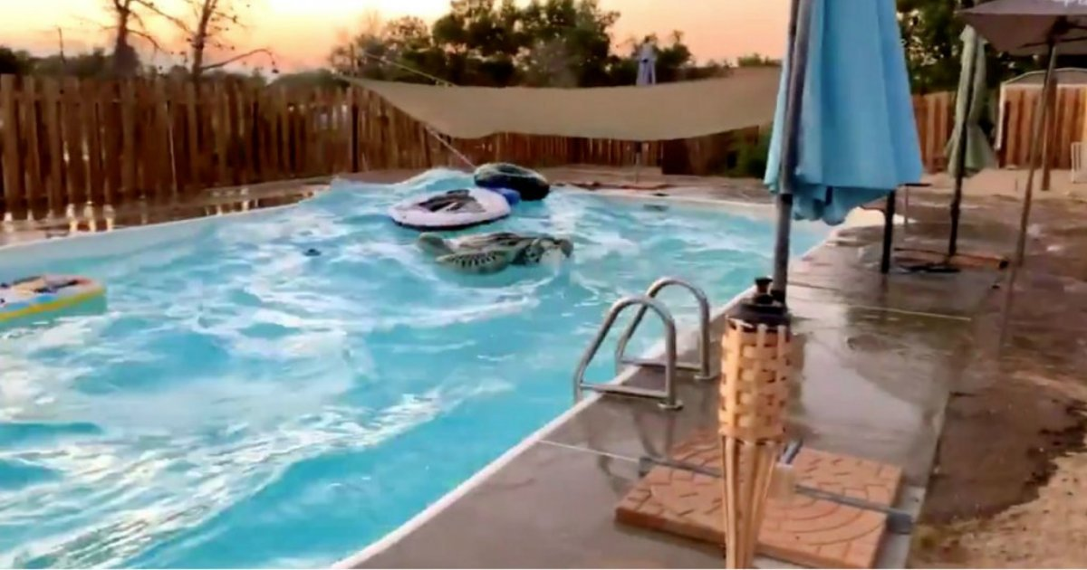 d2 6.png?resize=1200,630 - Water In Swimming Pools Trembles As Earthquake Hits California