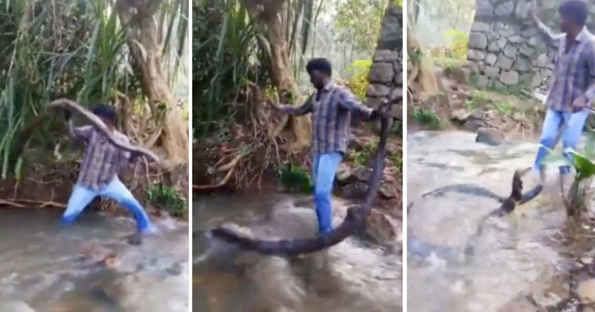 d3 22.png?resize=300,169 - Un Cobra Royal géant a été capturé dans un petit village d'Inde