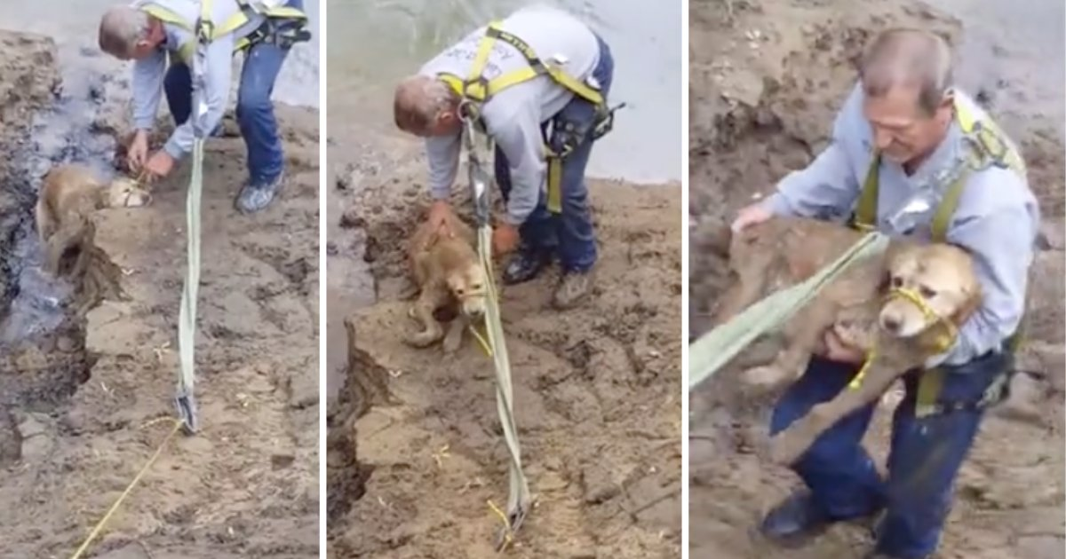 d41.png?resize=412,232 - Dog Missing for Days Was Found Trapped In A River Bank Full of Mud
