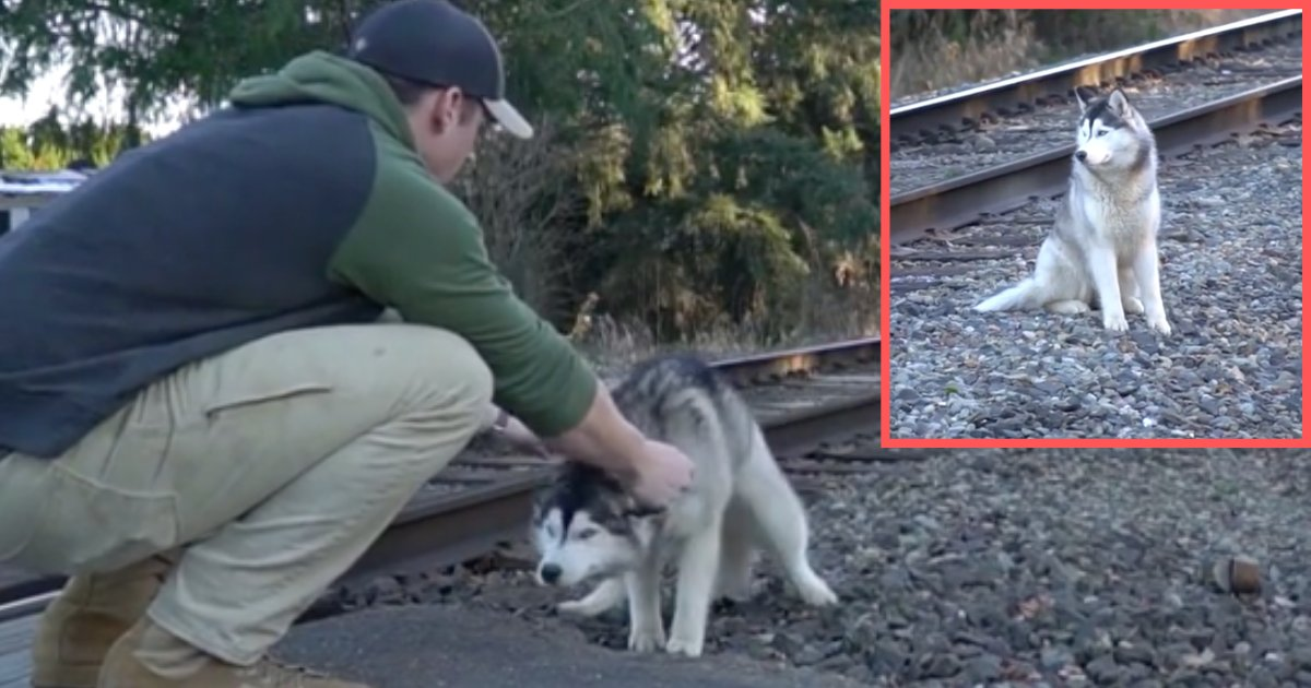 d5 3.png?resize=412,232 - US Firefighter Rescues A Husky From Train Tracks And Brings Him Home