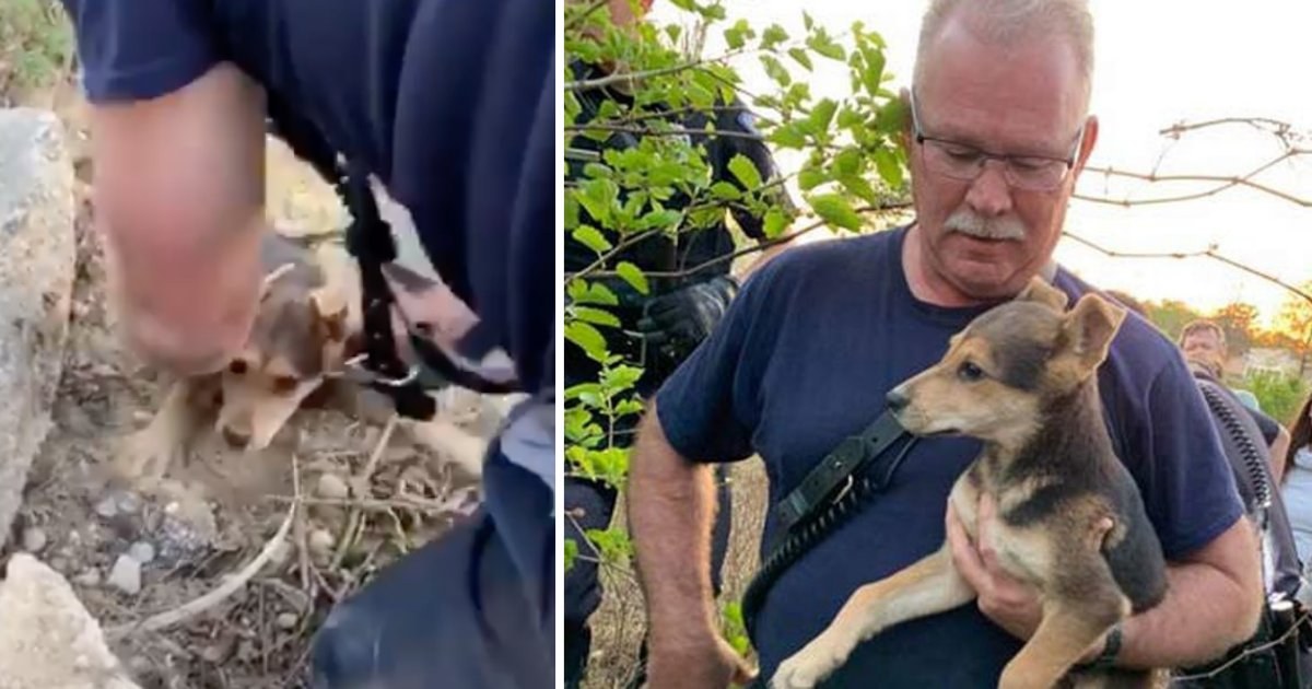 d6 10.png?resize=412,232 - SC Firefighter Rescued A Dog Trapped Under Pile of Rocks, Later Adopts Him