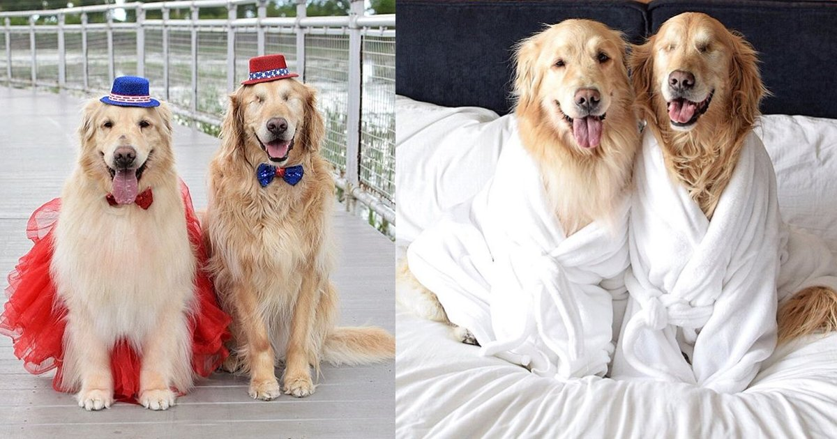 dfss.jpg?resize=412,275 - Jack The Golden Retriever And His Companion Addie Are Setting Examples Of Friendship And Their Pictures Have Taken The Internet By Storm