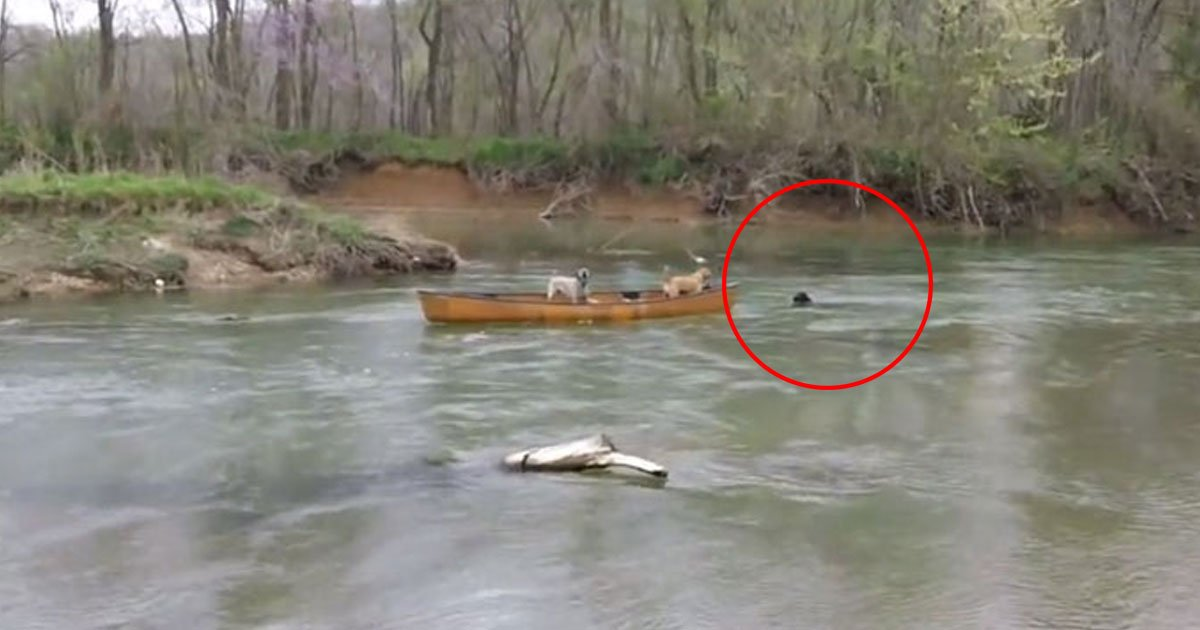 dog saves dogs.jpg?resize=412,232 - Black Labrador Saved Two Dogs Trapped In A Canoe That Started Moving Down A River