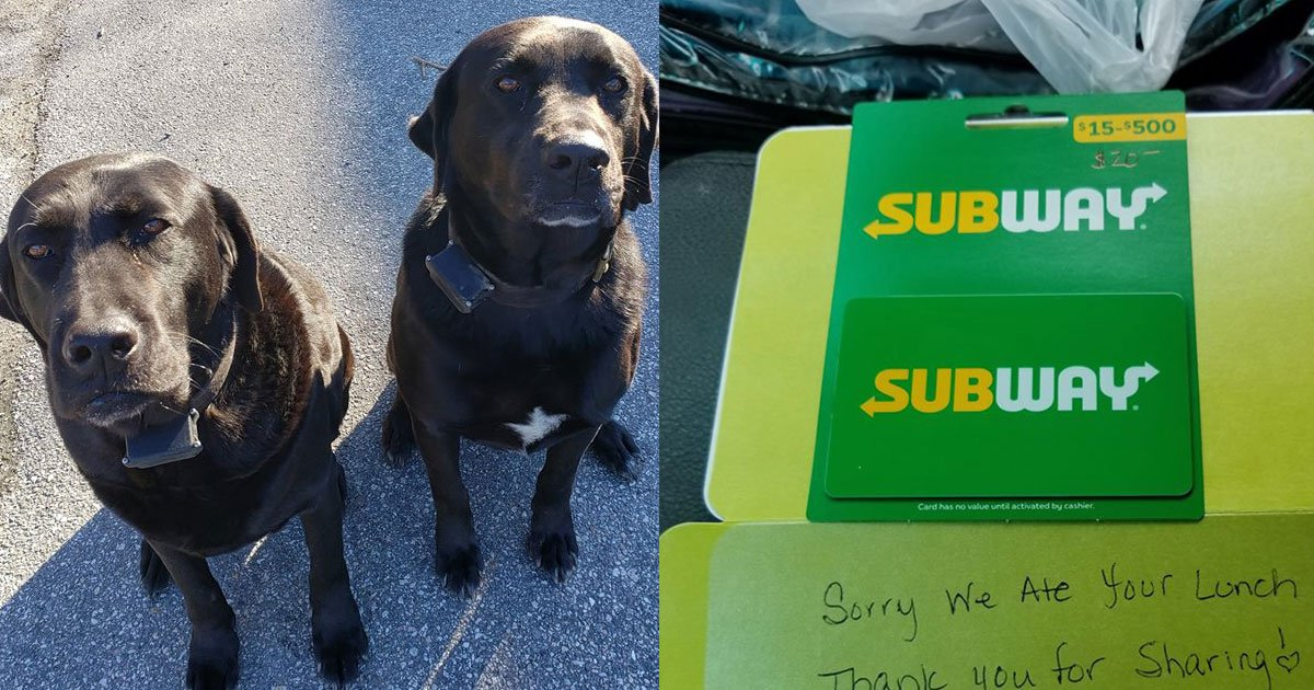 dogs stole mail carriers lunch but later made an apology note that went viral.jpg?resize=412,232 - Two Dogs Stole The Mail Carrier's Lunch And Their Apology Note Went Viral