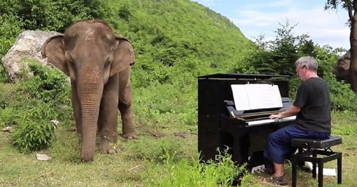 e3.jpg?resize=412,232 - Watch How This Blind Elephant Reacted When A Classical Pianist Started To Play Bach For Her